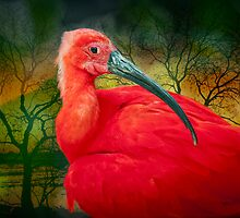 Scarlet Ibis by Bonnie T.  Barry
