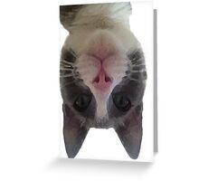 Crazy Gracie Upside Down Kitty Greeting Card