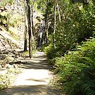 Path to Waterfalls - Grampians, Vic. Australia by EdsMum