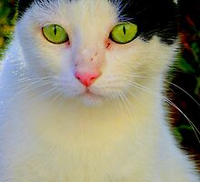 Cat with green eyes. by andrea3393