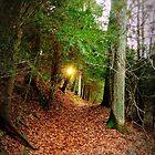 Eastern Hemlock Tree Forest at Sunset by TrendleEllwood
