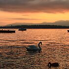 Geneva Sunset by Ann  Van Breemen