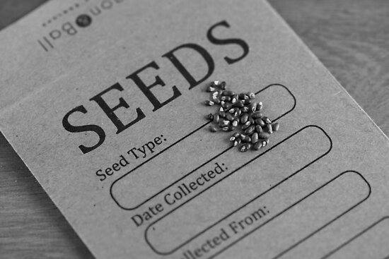Seeds by playwell