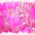 Hot Stuff - In Your Face PINK TULIPS by MotherNature