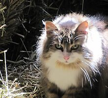 Barn cat with a halo by epicDi