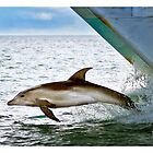 Dolphin On the Bow by Yanni