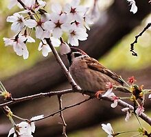 Bird amongst the blossoms by DerekEntwistle