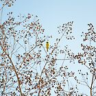 Little Yellow Bird by RichCaspian