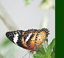 Madam butterfly on iPad:) by Kornrawiee