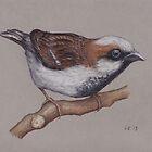 Sparrow by LFurtwaengler