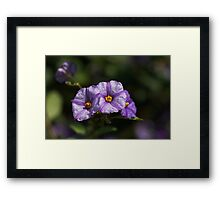Five Sections Framed Print