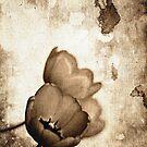 Vintage Flowers Sepia-Black-White by Denis Marsili - DDTK