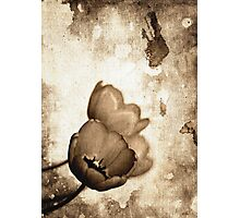 Vintage Flowers Sepia-Black-White Photographic Print