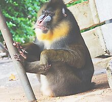Mandrill by PatiDesigns