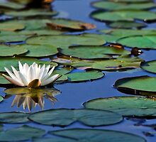 Tropical Water Lily by Christina Rollo