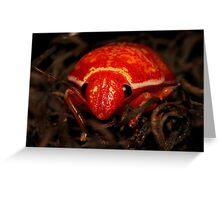 Mysterous Orange Beetle Greeting Card