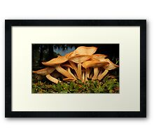 Fungal Beauty - Armillaria tabescens Framed Print