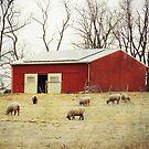 Sheep Farm by vigor