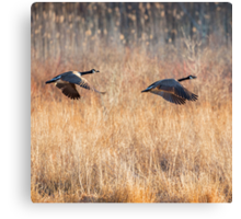 Canada Geese Square Canvas Print