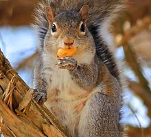 """Yummy on my Tummy, hows """"this"""" for a pose? by NatureGreeting Cards ©ccwri"""