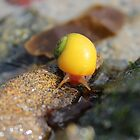 Snail's Pace by Tibbs