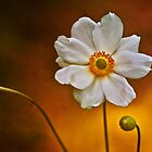 Windflower by Dianne English