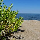 Lake Erie Beach Succulent by MSRowe Art and Design