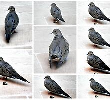 A COLLAGE OF A MOURING DOVE IN THE GARDEN by JAYMILO