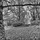 Garden of Ivy by Geoff Smith