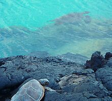 Land and ocean Hawaii turtles by artisticattitud