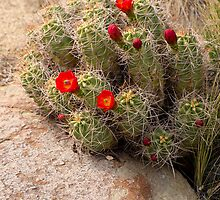 Beauty in the Desert by Lucinda Walter