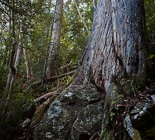 Rock and Tree, Tasmania by Kelly Slater