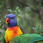 Rainbow Lorikeets by Sue Jaeschke