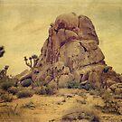Joshua Trees In The Desert by Lucinda Walter