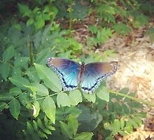 Blue Butterfly by JillSchimpf