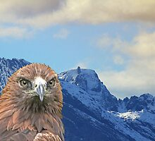 Inaccessible Pinnacle, Golden Eagle, Skye by Sandy Sutherland