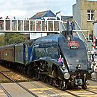 Sir Nigel Gresley - 60007 by Beverley Barrett