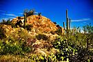 Saguaro National Park East by Roger Passman