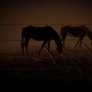 Dark horses by iamelmana