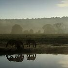 Early morning reflections by myraj
