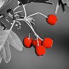 Berries  by D-GaP