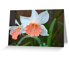 Pink Skirt Daffodil Greeting Card