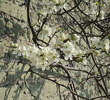 Blossom Wall by CreativeEm