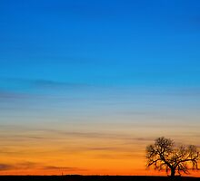Lonely Tree on the Plains by Bo Insogna