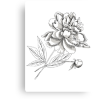 Peony.Sketch black and white Canvas Print