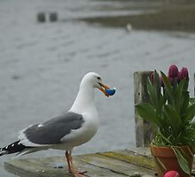 Easter Egg Gull Thief II by balsora