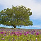 Colorful Meadow by John Butler