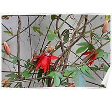 Love Flower Poster
