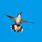 Flying Hummingbird Against Blue Sky by Christina Rollo