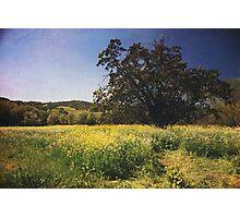 The Magic Field Photographic Print